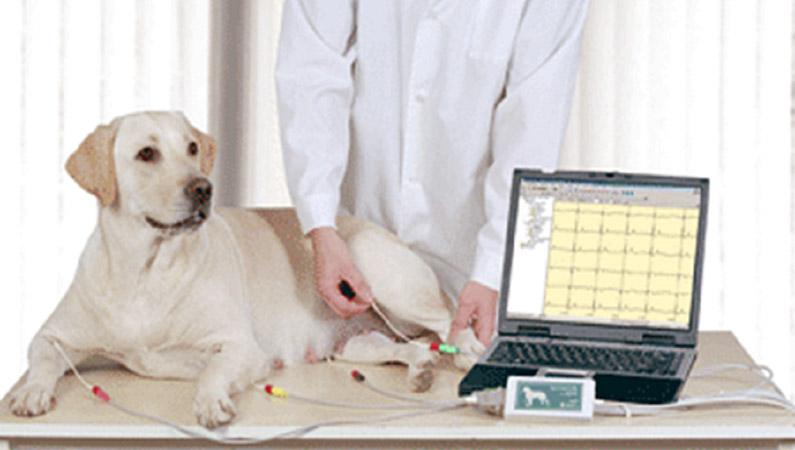 ветеринарная диагностика техника биовет